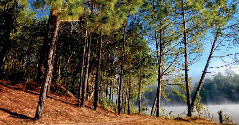 ป่าสนวัดจันทร์ สถานที่ท่องเที่ยวที่นักท่องเที่ยวจะได้พบกับความสวยงามของป่าไม้ที่ไม่เหมือนใคร
