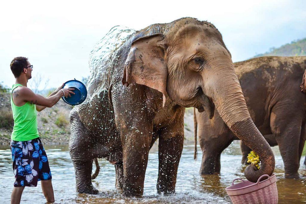 Elephant Nature Park ใกล้ชิดกับช้าง และแมวที่มูลนิธิอนุรักษ์ช้างและสิ่งแวดล้อม จังหวัดเชียงใหม่