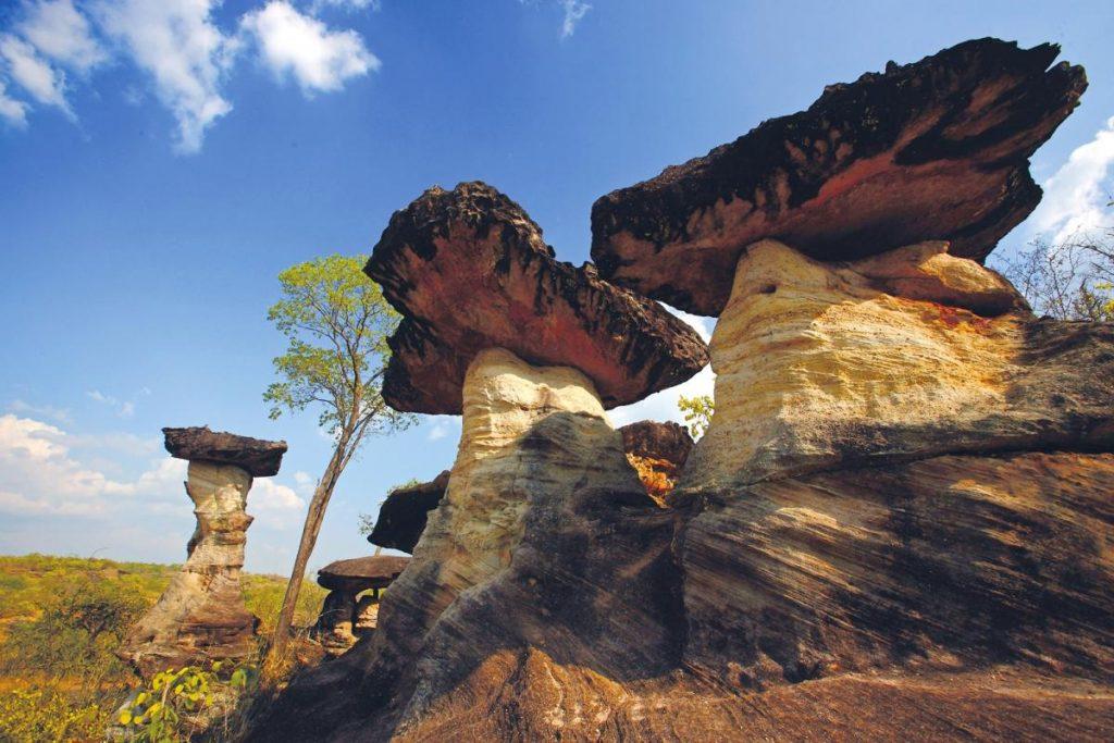 ป่าดงนาทาม จังหวัดอุบลราชธานี เดินป่าชมธรรมชาติอีกทั้งยังมีทุ่งดอกไม้หลากสี